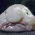 Blobfish_thumb