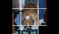 play Dog-Puzzle
