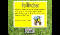 play Polllinchen