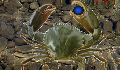 play CrabGame 2.1: Crablord's Demise