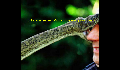 play Snake Game