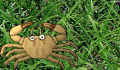 play Little crab game!