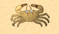 play Crab Game