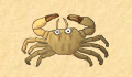 play little-crab-4