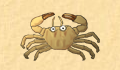 play little-crab
