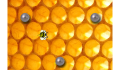 play Learn about Bees!